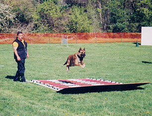 Alert Canine Traning Solutions Dog Training. Matt Carraturo.